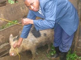 Bwana (small size)