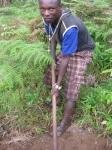 Man weeding