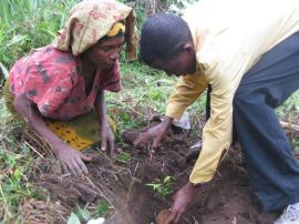 Tree planting (website) May