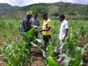 1 Imamu Athumani Shemtoi with Charles Emmanuel, Peter Shemweta and Hamza Saidi inspecting the maize